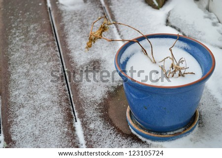 Porch plant in first snowfall - stock photo