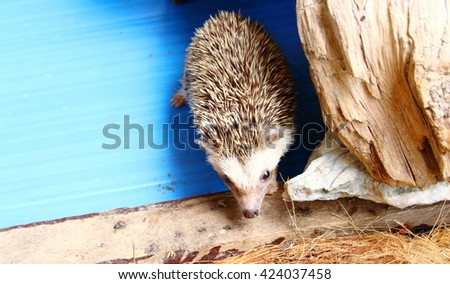 porcupine in the cage - stock photo