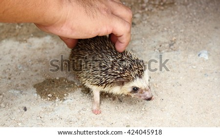 porcupine in the hand - stock photo
