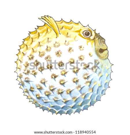Porcupinefish or blowfish or balloonfish or globefish or pufferfish - stock photo
