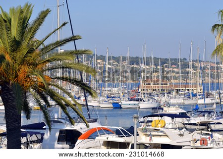 Port of Bandol and palm tree, commune in the Var department in the Provence-Alpes-Cote d'Azur region in southeastern France. - stock photo