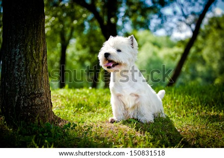 porterty dog outdoors in a park, dogs on grass, dogs playing in nature - stock photo
