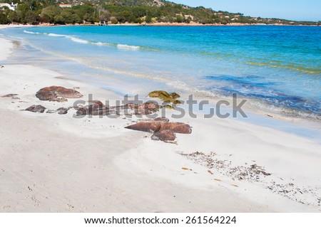 Porto Istana beach on a clear spring day. Shot in Sardinia, Italy - stock photo