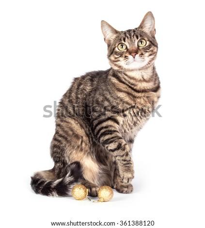 Portrait cat isolated on white background - stock photo