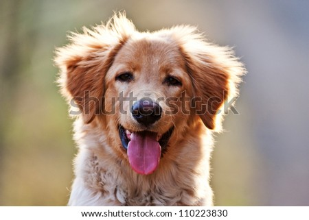portrait dog - stock photo