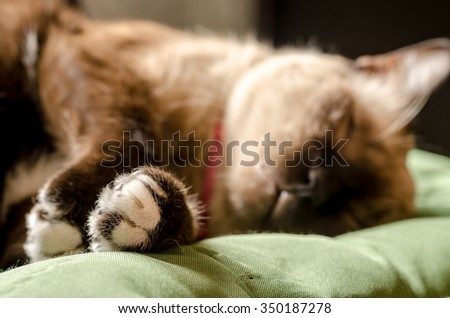 portrait home gray cat resting in a sofa - stock photo
