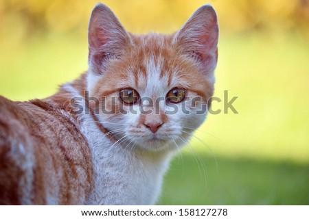 Portrait kitten - stock photo