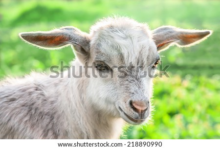 Portrait of a baby goat on a green meadow. - stock photo