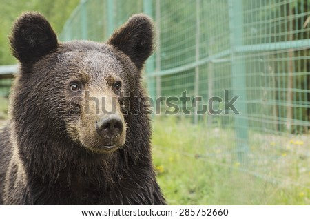Portrait of a bear in a Zoo with wet fur - stock photo