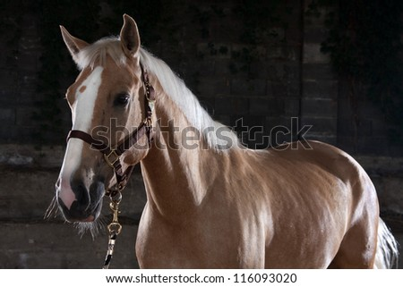 portrait of a beautiful brown horse in a shelter - stock photo