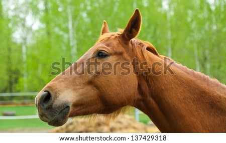 portrait of a beautiful brown horse in the forest close up