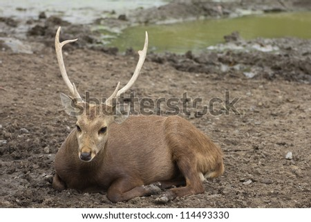 Portrait of a beautiful deer with his partner - stock photo