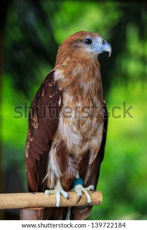 Portrait of a beautiful eagle