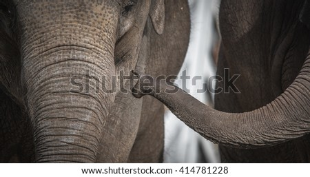 Portrait of a beautiful Elephant family - stock photo