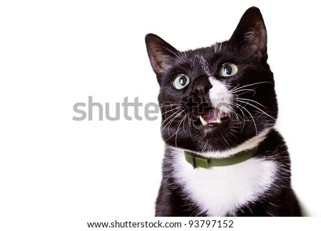 Portrait of a beautiful funny black and white cat isolated on white background