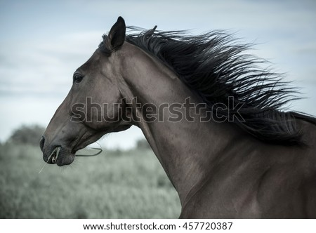 Portrait of a beautiful horse at summer day