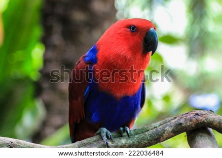 Portrait of a beautiful parrot ara Ararauna in nature  - stock photo
