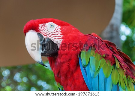 Portrait of a beautiful parrot, Florida, USA