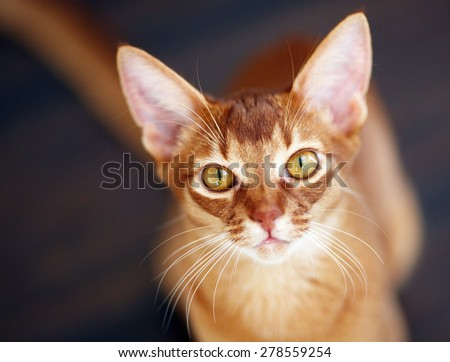 Portrait of a  beautiful red cat - stock photo