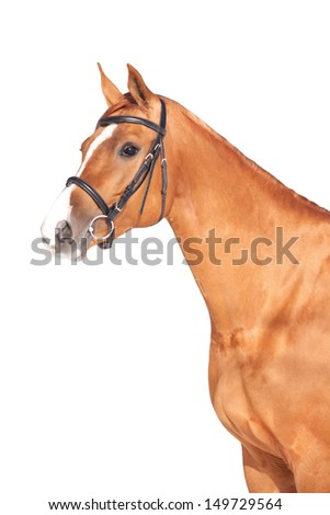 Portrait of a beautiful Russian Don horse, isolated over white - stock photo