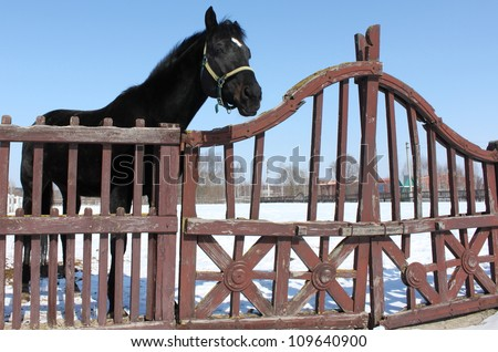 Portrait of a beautiful thoroughbred horse - stock photo