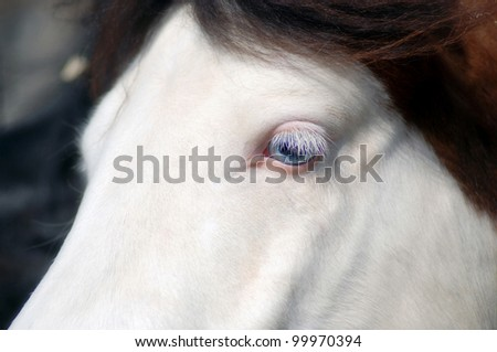 Portrait of a beautiful white horse with blue eyes, long lashes and brown hair close-up crop - stock photo