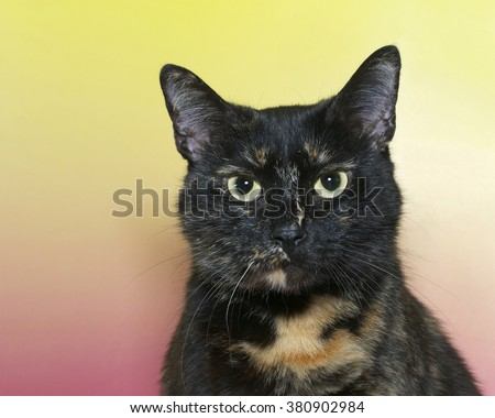 Portrait of a black and orange tortie torbie, or Tortoiseshell tabby cat with green eyes on pink and yellow textured background. Cat looking off to the side. Copy space - stock photo
