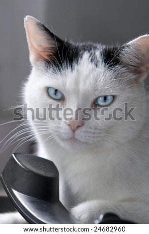 tough male cat names