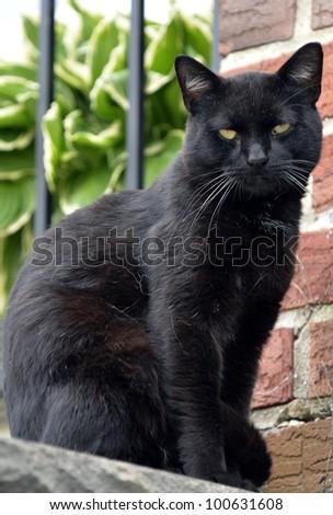 Portrait of a black cat - stock photo