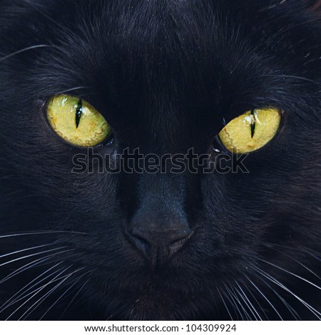 Portrait of a black cat outdoor - stock photo
