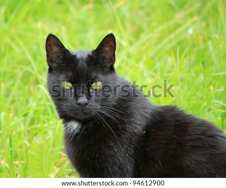 Portrait of a black cat with yellow eyes standing outside in green grass