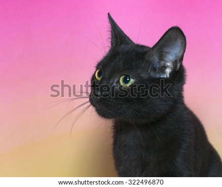 portrait of a black domestic short hair kitten with yellow green eyes isolated on a mottled pink and yellow background, cat looking to the side. - stock photo