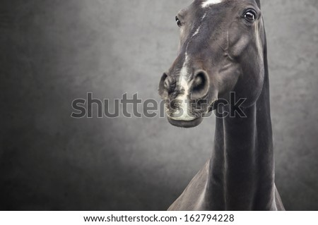 Portrait of a black horse against a dark background  - stock photo