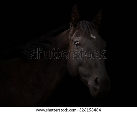 Portrait of a black horse on a black background
