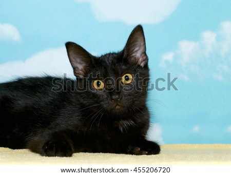 portrait of a black tabby kitten laying on a yellow blanket looking at viewer, hopeful for a forever home. Blue background with white clouds, copy space - stock photo