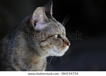 portrait of a brown cat:background black