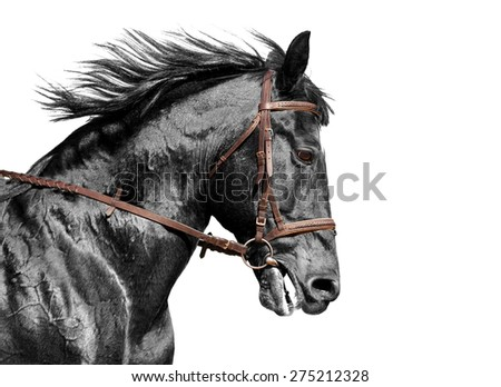 Portrait of a brown horse in the bridle. - stock photo