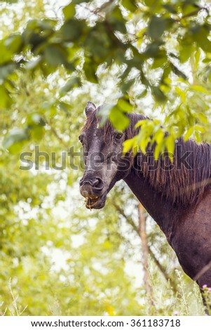 portrait of a brown horse with his mouth open in the green foliage - stock photo