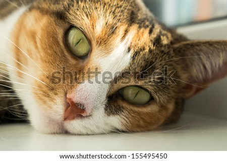 Portrait of a cat - stock photo