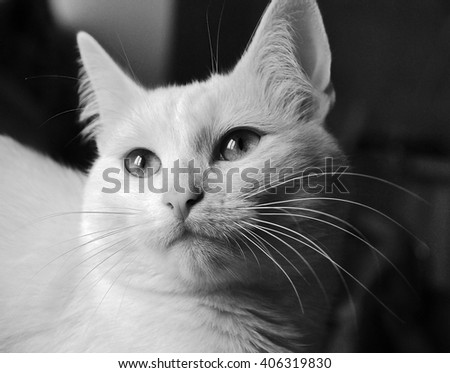 portrait of a cat