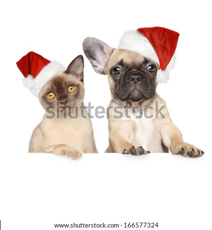 Portrait of a cat and dog in Christmas red hats on a white banner - stock photo