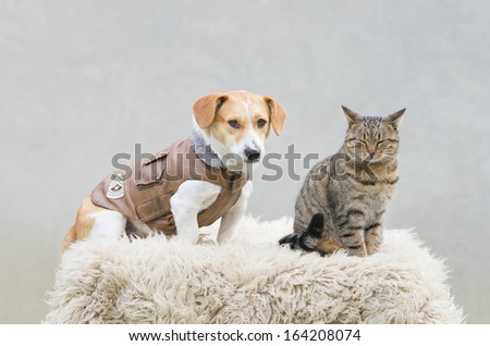Portrait of a cat and dog in leather jacket - stock photo