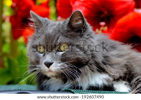 Portrait of a cat enjoying a beautiful day in a garden/ Portrait of a cat in a garden/ - stock photo