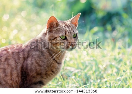 Portrait of a cat on green background - stock photo