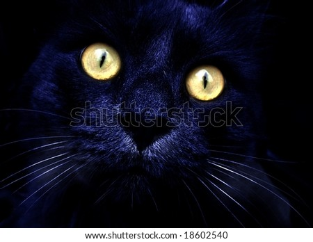 portrait of a cat on the night