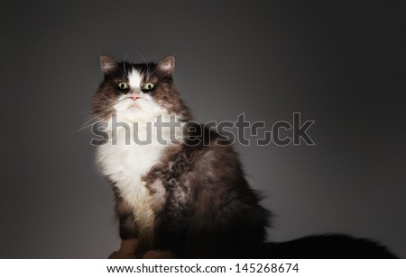 Portrait of a cat sitting against gray background - stock photo