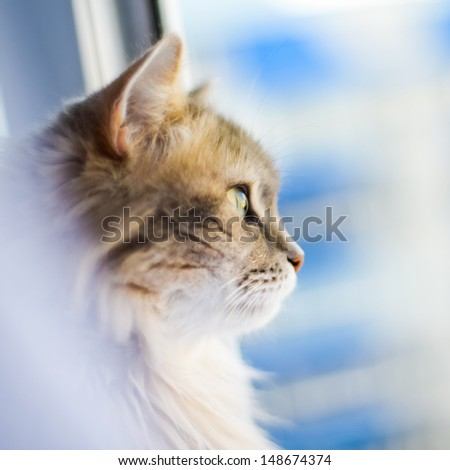 portrait of a cat that looks out of the window - stock photo