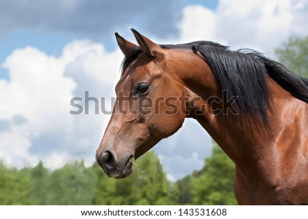 Portrait of a curious Quarter horse mare - stock photo