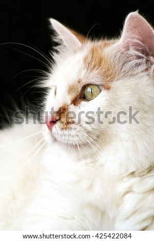 portrait of a curious, white cat looking out the window, vertical, copy space - stock photo