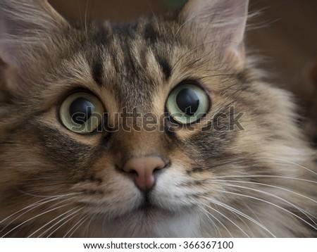 Portrait of a cute fluffy cat closeup. - stock photo